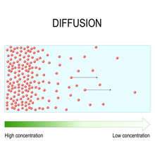 Diffusion Is Movement Of Molec...