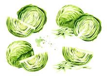 Fresh Cabbage Set. Watercolor ...