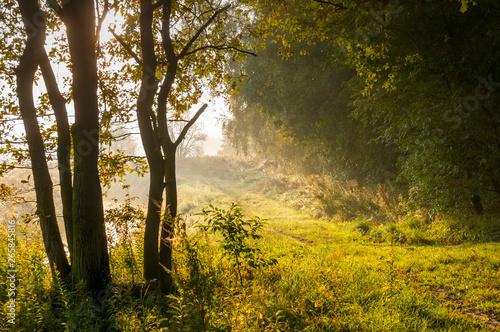 Fototapeta  Sonnenaufgang im Wald mit Morgennebel