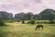 ein einsames Pferd steht im Sonnenuntergang auf einer grünen Wiese