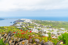 View Of Wild Flowers, Aegean Sea And Village Oia In The Distance, Santorini, Greece