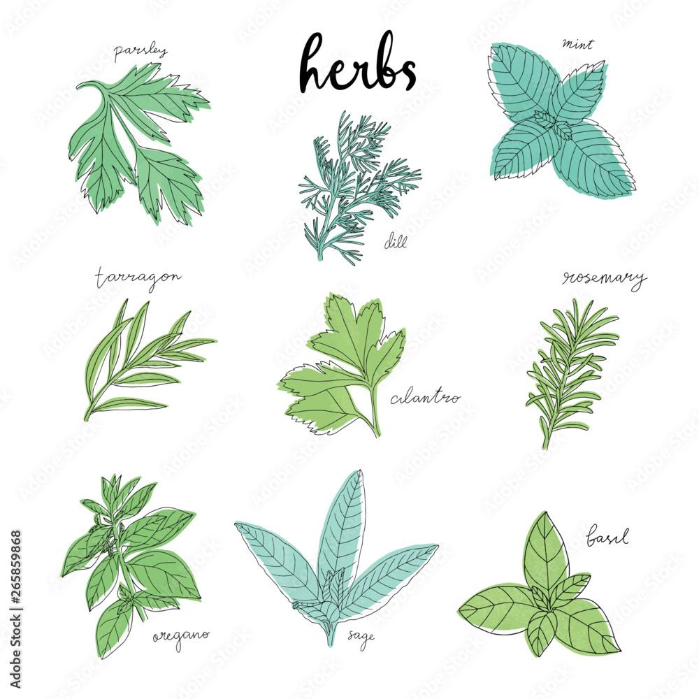 Fototapety, obrazy: greenery herb leaves clipart set