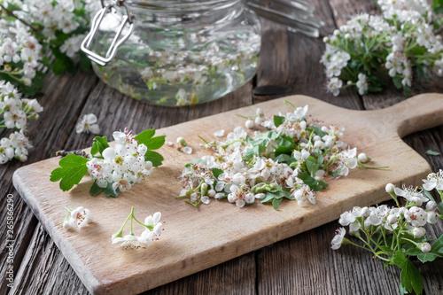 Obraz na płótnie Preparation of tincture from hawthorn flowers