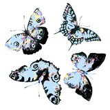 Fototapeta Motyle - beautiful blue butterfly,watercolor,isolated on a white