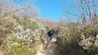 A follow shot of an extreme MTB mountain biker riding bike on trails full of blooming bushes on a sunny morning.