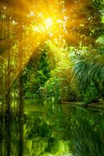 The Wild Nature. Beautiful Lan...