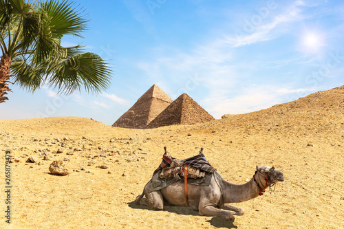 Recess Fitting Beige Desert scenery with the Pyramids, a camel amd palm trees, Egypt