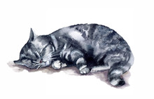 Grey Cat Sleeping On The White Background. Watercolor Cute Funny Cat On The White Background