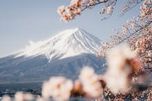 Mount Fuji Japan Sakura Cherry...