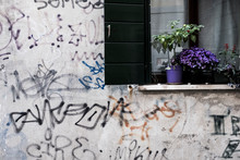 Close Up Of White Wall Covered In Graffiti, Window With Black Shutters And Purple Flowers On Window Sill.
