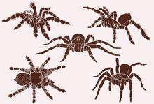 Graphical Set Of Tarantula Spiders, Vector Vintage Illustration