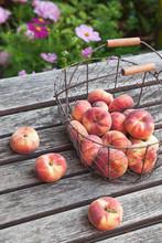 Wire Basket Of Doughnut Peaches On Garden Table