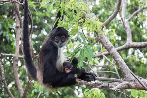 Cadres-photo bureau Singe Spider monkey