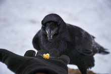 Bird Eating From Palm