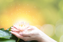 Hand Holding Lotus Or Water Lily For Vesak Day, Buddhist Lent Day, Buddha's Birthday, Buddha Purnima Worshiping, And World Human Spirit.
