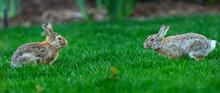 Rabbit: Ready To Fighting