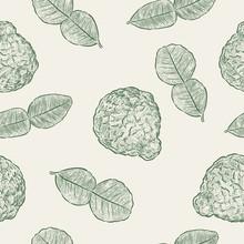 Kaffir Lime, Seamless Pattern Vector.