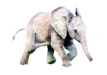 Watercolor Drawing Of A Little Baby Elephant.