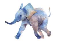 Watercolor Drawing. Walk A Little Baby Elephant