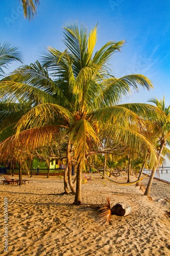 Sunrise on the beach with palms in Hopkins, Belize, Central America Wallpaper Mural