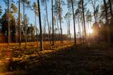 las, drzewo, lasy, wiosna, jesień, bory tucholskie, drzewa, sosny, sosna, światło, cień