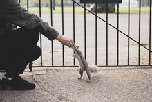 Squirrel Taking Nuts From Mans...