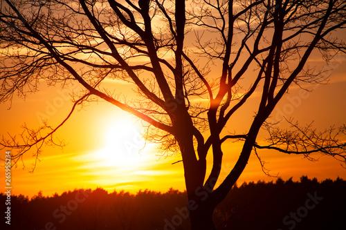 Obraz zachód słońca, wschód słońca, słońce, duże słońce, piękny zachód słońca, tapeta, pomarańczowo - fototapety do salonu