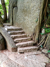 Old Stone Stairs Step  Ingrown Trees Tropics