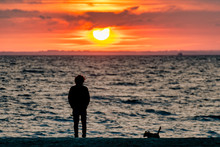 Silhouette Of Man And Dog Watc...