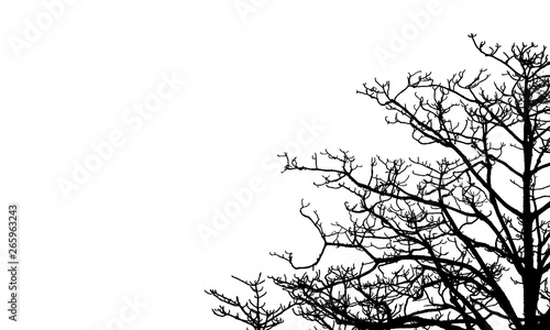 Photo sur Toile Oiseaux sur arbre Dead tree and branch isolated on white background. Black branches of tree backdrop. Nature texture background. Tree branch for graphic design and decoration. Art on black and white scene.