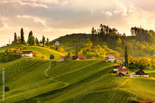 Grape hills view from wine road in Austria. South styria vineyards landscape. Sulztal