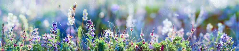 Fototapety, obrazy: wild flowers and grass closeup, horizontal panorama photo