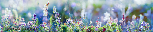 Tuinposter Bloemen wild flowers and grass closeup, horizontal panorama photo