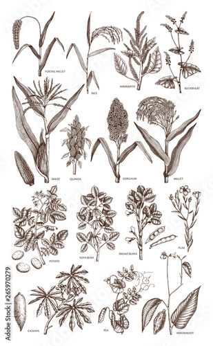 Photo Hand drawn agricultural plants set