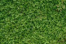 Green Mossy Grass Texture
