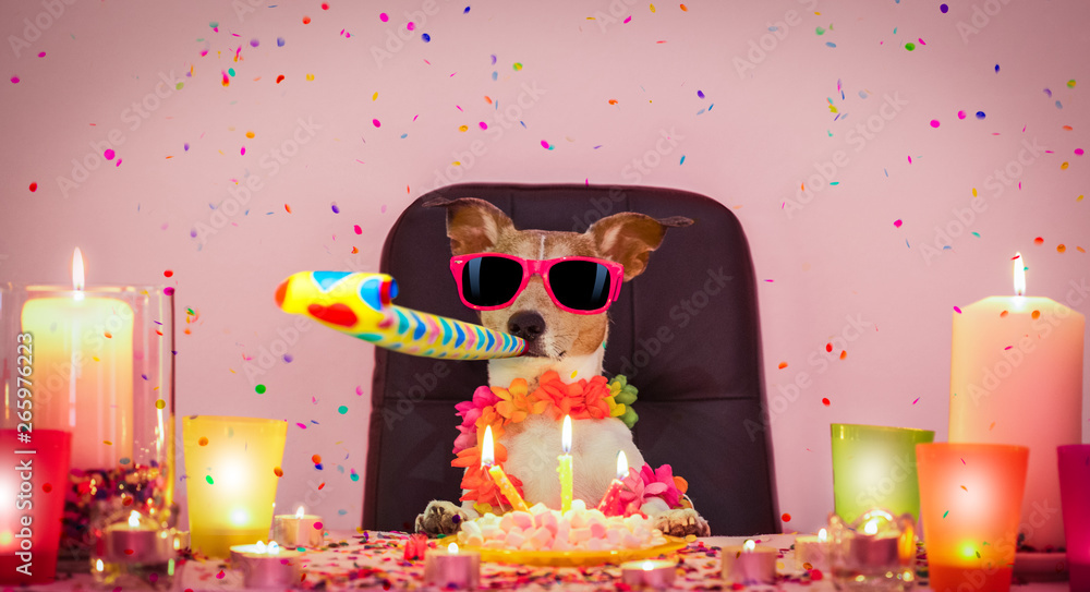 Fototapety, obrazy: happy birthday dog