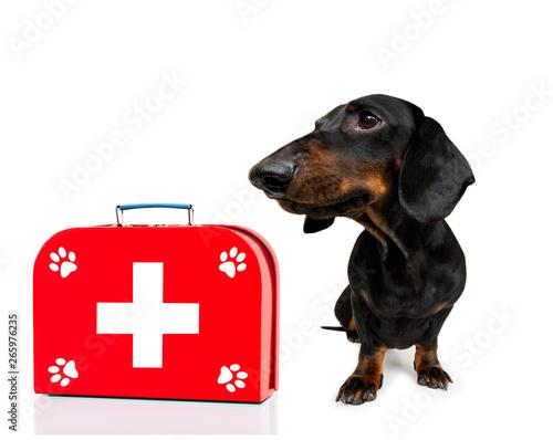 Fotobehang Crazy dog medical doctor dog