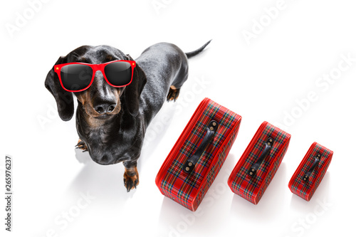 Fotobehang Crazy dog dog on vacation