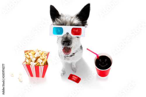 Fotobehang Crazy dog dog to the movies