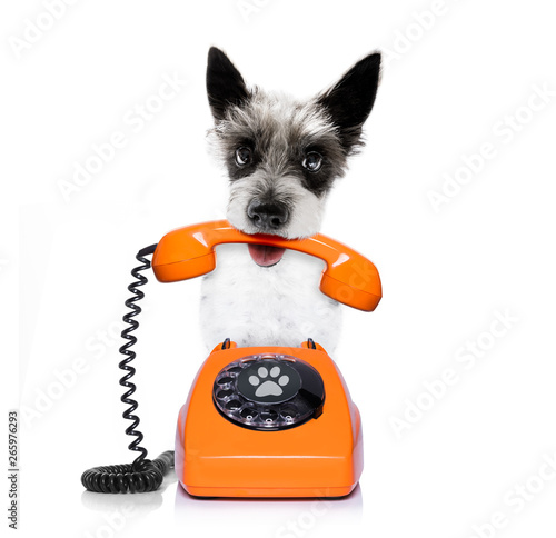 Foto op Aluminium Crazy dog dog on the phone