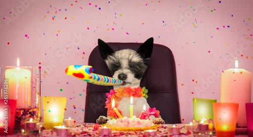 Fotobehang Crazy dog happy birthday dog