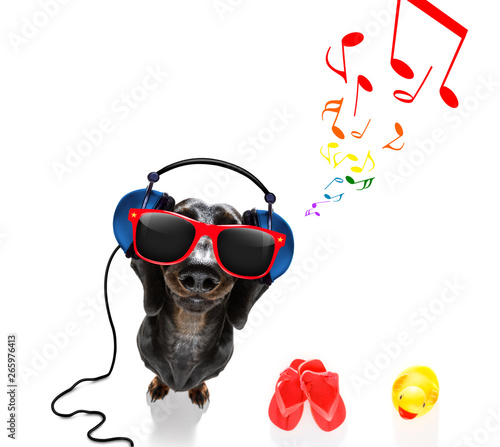 Fotobehang Crazy dog dog listening to music