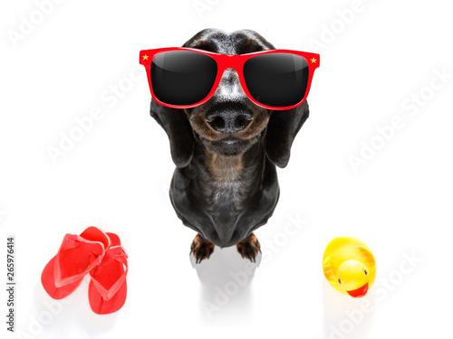 Fotobehang Crazy dog summer vacation dog