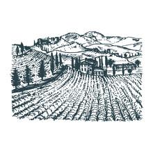 Vector Illustration Of Vineyar...