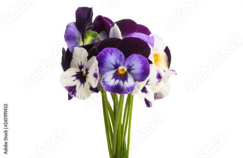 Fototapety, obrazy: pansy flower isolated