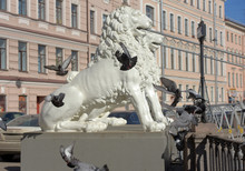 Pigeons Fly Around The Head Of The Lion Sculpture On Lion Bridge In St. Petersburg