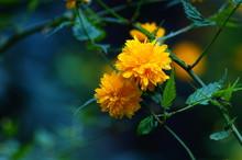 Pory Roku ,kwiaty Wiosny Uroda...