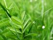 Grünen Blatt vom Planze mit Blende. Hintergrund im Grün.