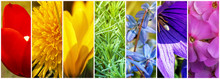 Collage Of Spring Flowers. Pan...