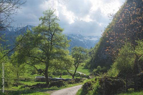 Fototapeta Village road on the spring landscape with Julian Alp mountains valley in Slovenia- Bohinj Area , with green meadon obraz
